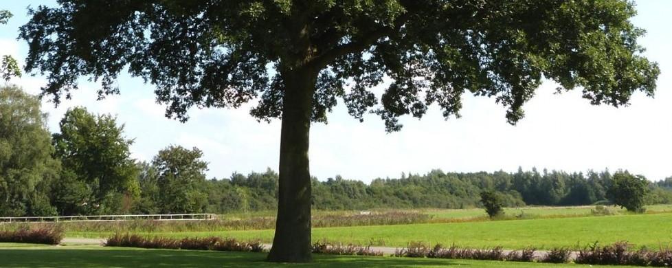 Herten spotten onder de boom